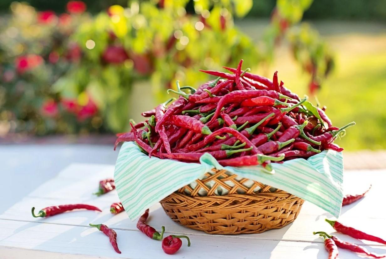 červená paprika