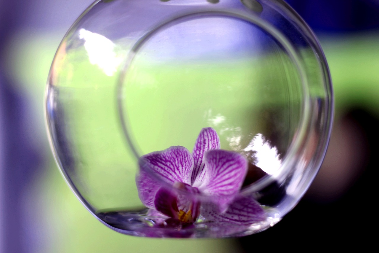 orchidej ve skle
